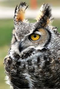 Great Basin Wildlife Rescue and Education