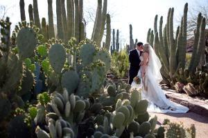 desert botanical garden - Desert Botanical Garden