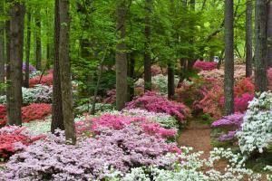 Overlook Azalea Garden