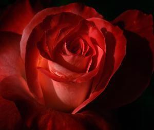Rose Petal Florist