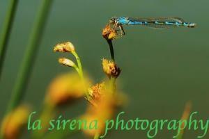 La Sirena Photography