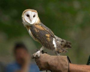 Pocono Wildlife Rehabilitation and Education Ctr