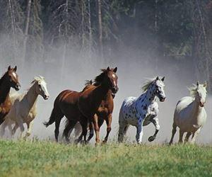 Horsemen Photographers