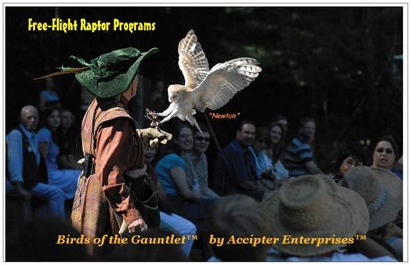 Birds of Prey by Accipiter Enterprises