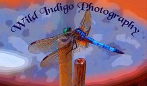 Wild Indigo Photography