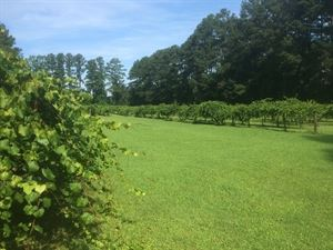 Auman Vineyards