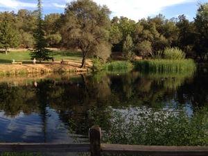 Pond Venue