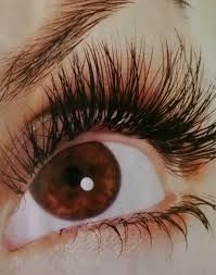 Lash and Wax