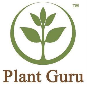 Aromatherapy Oils & Organic Products - Plant Guru