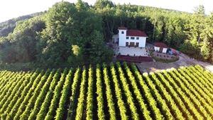 Fulchino Vineyard