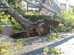 Wilmington Local Tree Service