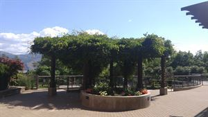 Gellatly Terrace