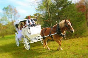 Tying The Knot Weddings And Events