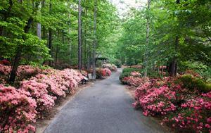 Azalea Garden Pavilion