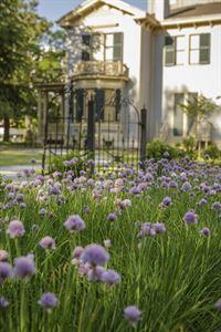 Gardens of the Woodrow Wilson Family Home