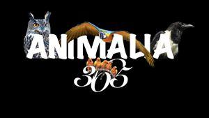 ANIMALIA365