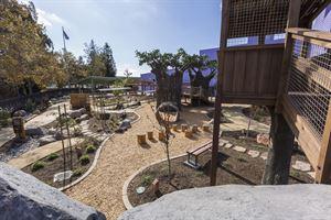 Bill's Backyard: Bridge to Nature