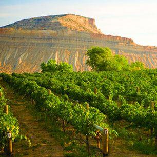 Wine Country Ceremonies