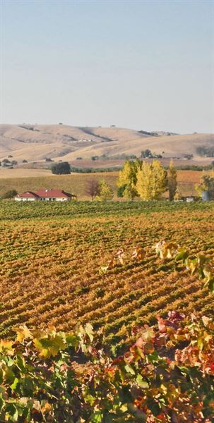 Vina Robles Pleasant Valley Vineyard