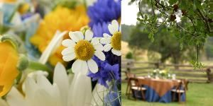 Grass Valley Weddings~ Joy of Life Events