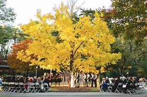 The Ginko Tree Ceremony Site