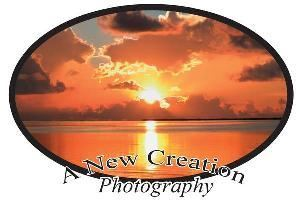 A New Creation Photography