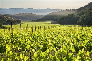 Pietra Santa Winery
