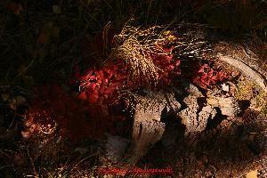 Caldera Photography