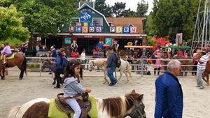 Lemos Ponies for Parties