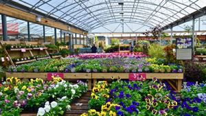 Cambridge Garden Centre