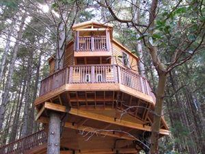 Vertical Horizons Treehouse Paradise