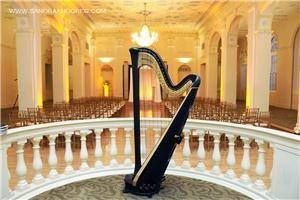 Dania M Lane Harpist