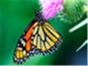Butterflies Abound