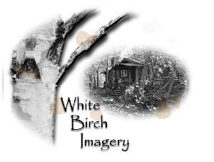 White  Birch Imagery
