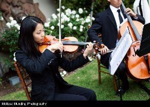 Subito Strings