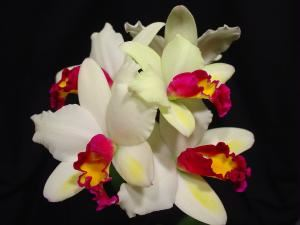 Amos Orchids