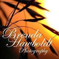 Brenda Hawboldt Photography