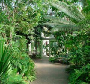Conservatory Waterfall Area